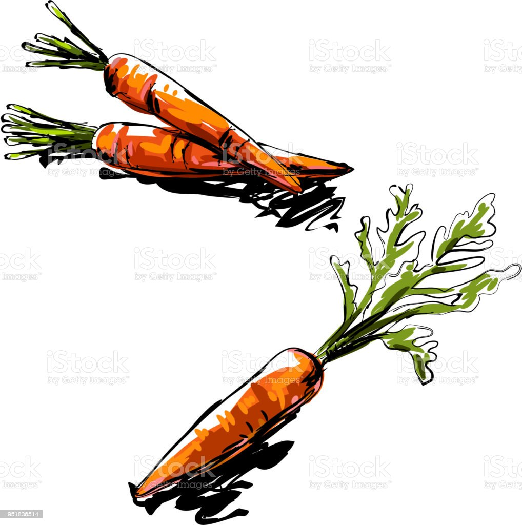 Carrot Drawing Stock Illustration Download Image Now Istock