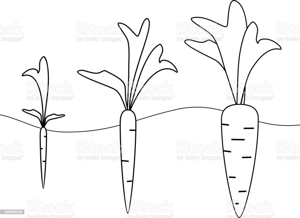 ilustração de estágios de crescimento de cenoura para colorir