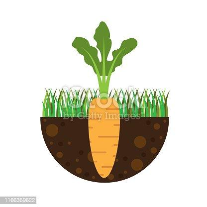 carrot. eps 10 vector file