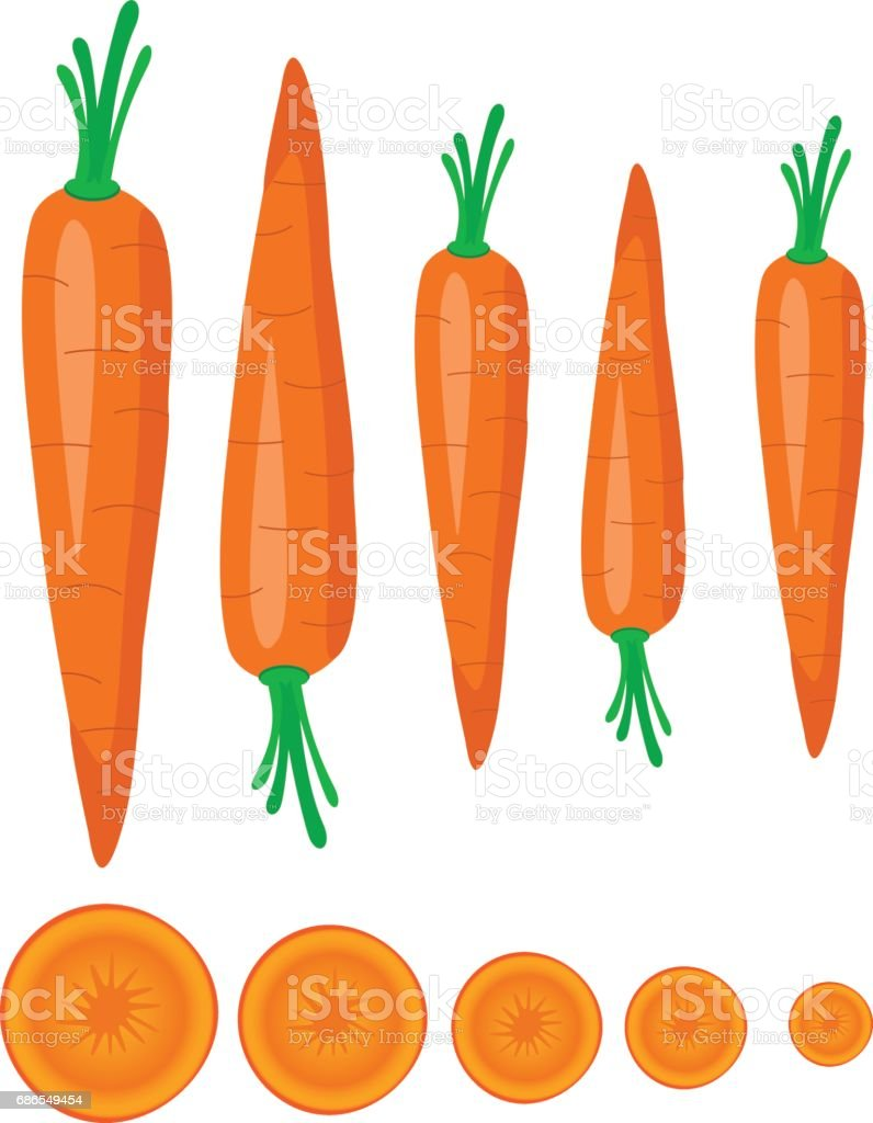 Carrot vector art illustration