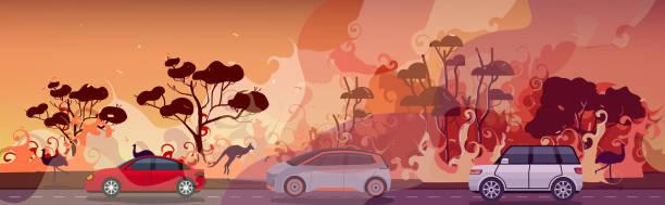 bildbanksillustrationer, clip art samt tecknat material och ikoner med bilar och djur som flyr från skogsbränder i australien wildfire bushfire brinnande träd naturkatastrof evakuering koncept intensiv orange flames horisontell - skog brand