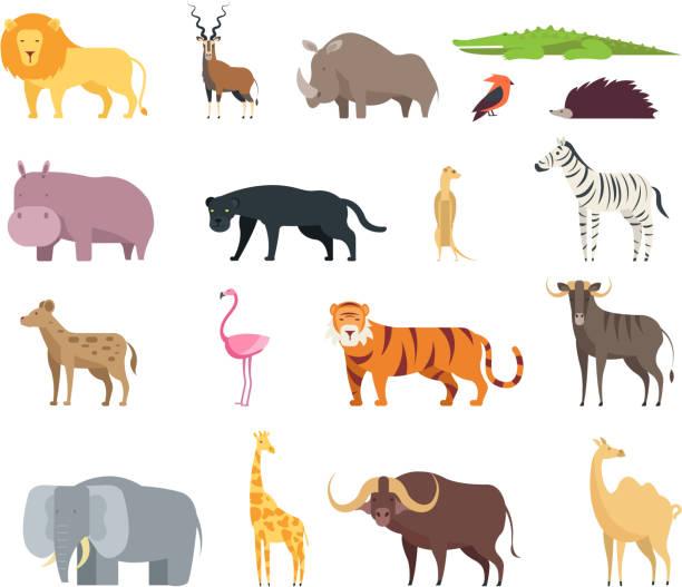 comic-tiere der afrikanischen savanne. wilden zoo safari säugetiere, reptilien und vögel vektor satz isoliert auf weißem hintergrund - giraffenhumor stock-grafiken, -clipart, -cartoons und -symbole