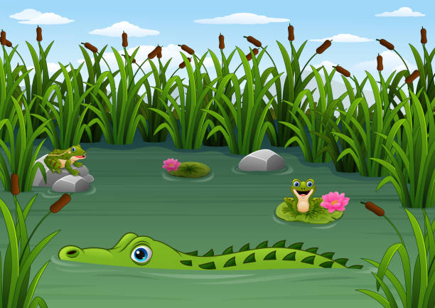 cartoon alligator and frogs in the pond - reptiles stock illustrations