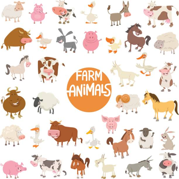 cartoon animal characters large set - farm animals stock illustrations, clip art, cartoons, & icons