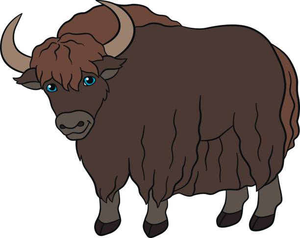 Best Yak Clipart Illustrations, Royalty-Free Vector ...