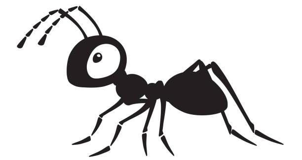 ilustrações de stock, clip art, desenhos animados e ícones de cartoon ant black and white - inseto himenóptero