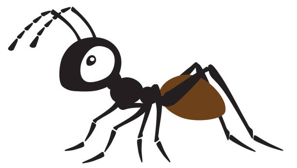 cartoon ant insect cartoon ant insect . Side view vector illustration isolated on white ant stock illustrations