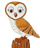 Cartoon barn owl isolated on white background