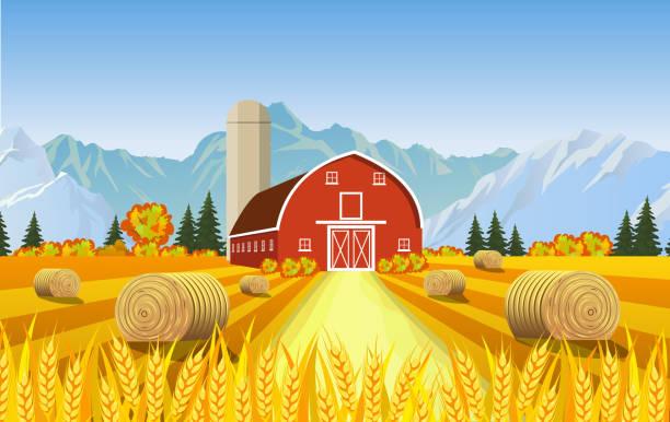 cartoon beautiful fall farm scene - herbstgemüseanbau stock-grafiken, -clipart, -cartoons und -symbole
