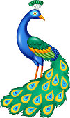 Vector illustration of Cartoon beautiful peacock