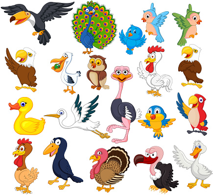 Cartoon bird collection set