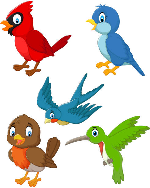 cartoon birds collection set - cardinal mascot stock illustrations, clip art, cartoons, & icons