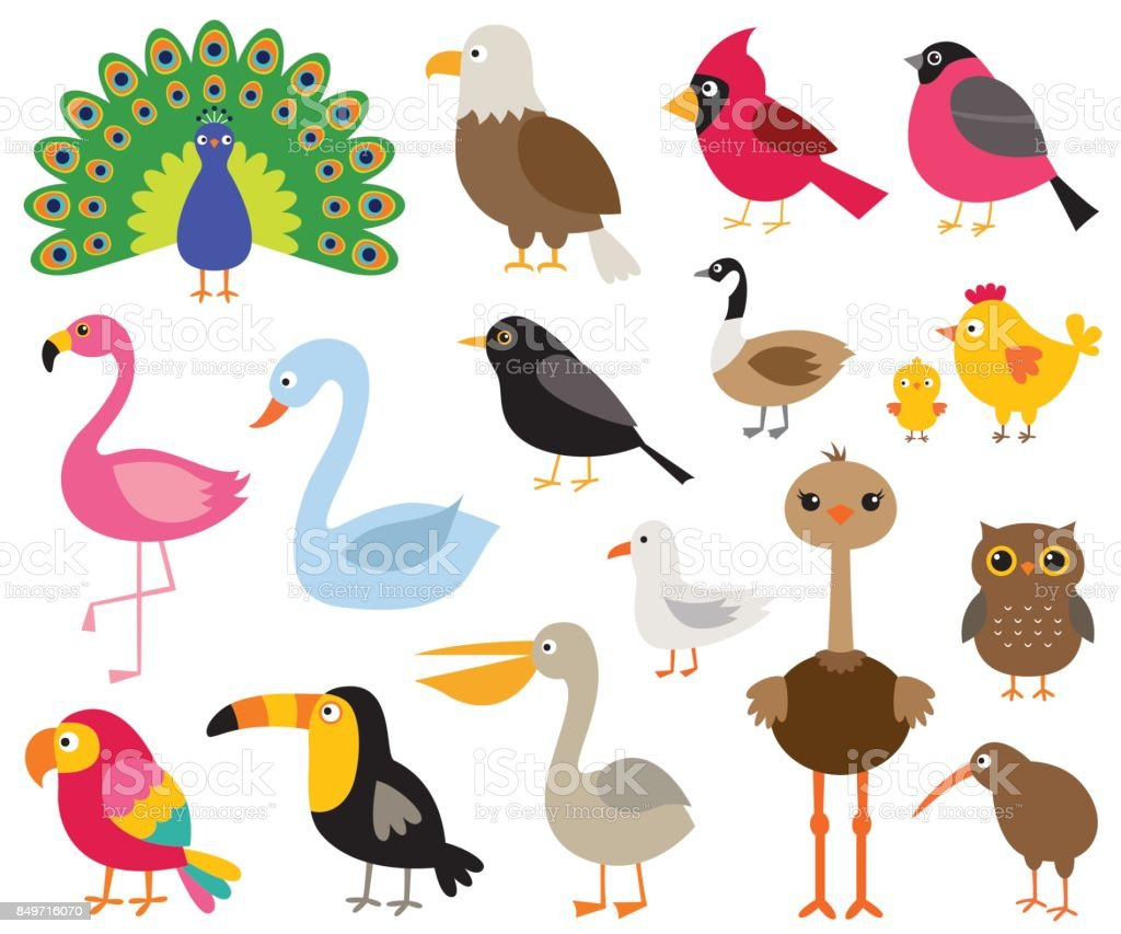 Ilustración De Aves De Dibujos Animados Ilustraciones