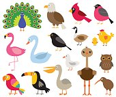 Cartoon birds, isolated illustrations set