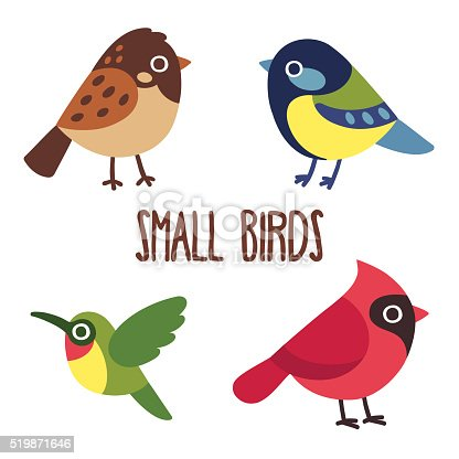 Cute cartoon wild birds set.  Sparrow and blue tit, colibri and red cardinal. Vector bird icons.