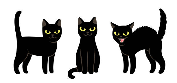 Cartoon black cat set Cute black cat set. Sitting, standing and angry hissing. Simple cartoon drawing, isolated vector illustration. black cat stock illustrations