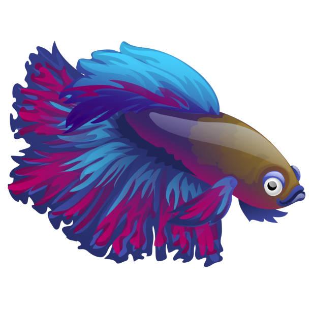 Betta Fish Background Illustrations, Royalty-Free Vector ... (612 x 612 Pixel)
