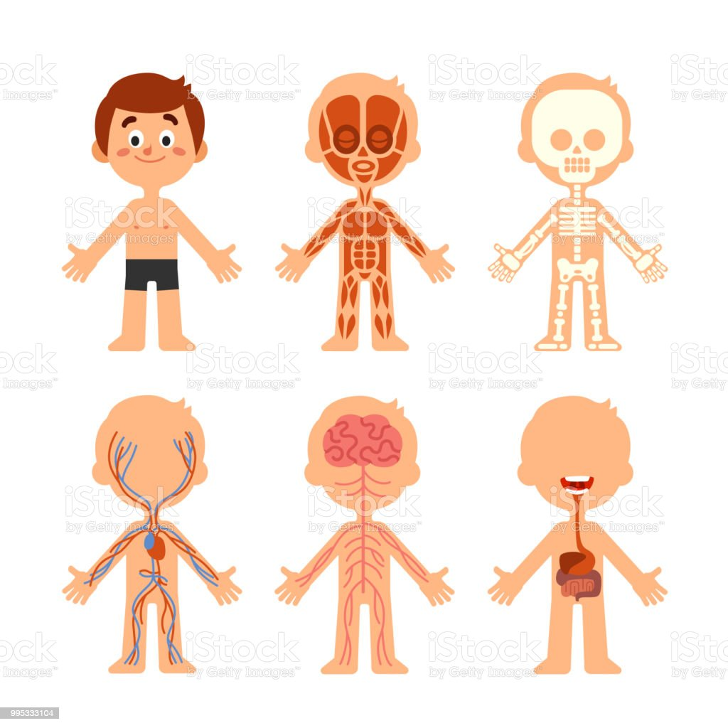 Cartoon Boy Body Anatomy Human Biology Systems Anatomical Chart ...