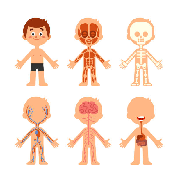 free human body vector art free human body vector art