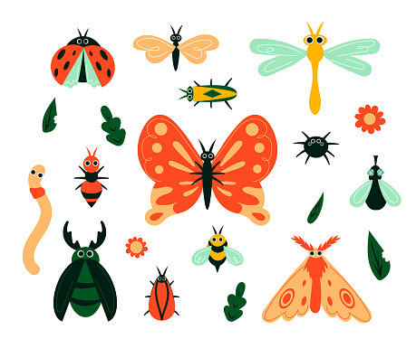 Cartoon bugs. Garden insects and plant leave or flowers. Isolated butterflies, moths and caterpillars. Beetles and spiders, flies and bees. Minimalist animals, vector hand drawn set