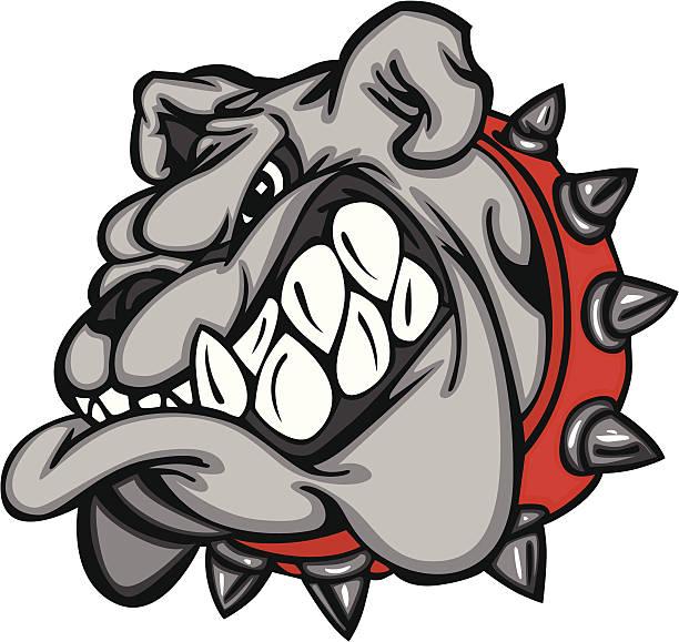 bildbanksillustrationer, clip art samt tecknat material och ikoner med cartoon bulldog face with big teeth and a red, spiked collar - bulldog