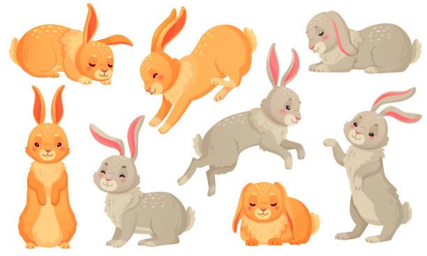 cartoon-hase. kaninchen haustiere, osterhasen und plüsch-knaper-kaninchen haustier isoliert vektor-illustration-set - kaninchen stock-grafiken, -clipart, -cartoons und -symbole