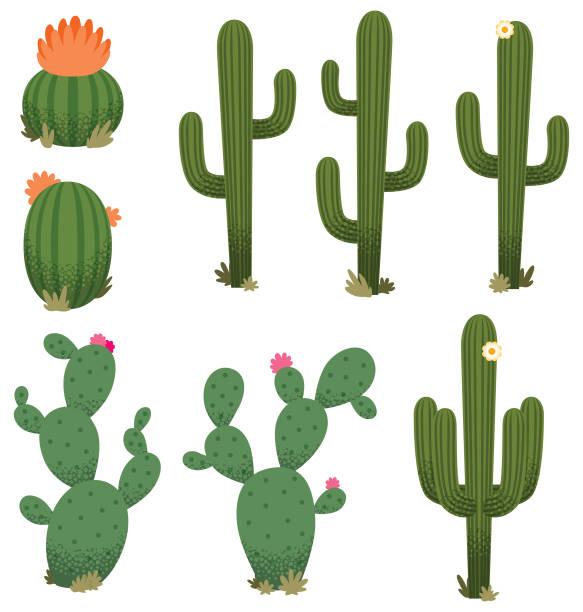 stockillustraties, clipart, cartoons en iconen met cartoon cacti - cactus
