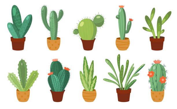 stockillustraties, clipart, cartoons en iconen met cartoon cactus set. vectorset van heldere cactussen en aloë. gekleurde, heldere cactussen bloemen geïsoleerd op witte achtergrond - cactus