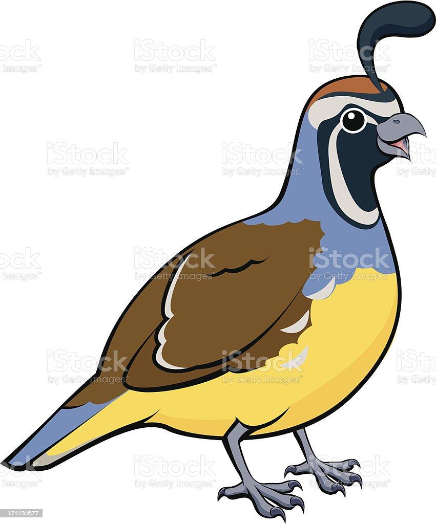royalty free quail clip art vector images illustrations istock rh istockphoto com quail clip art black and white quail hunting clipart