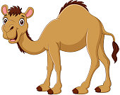 Vector Illustration of Cartoon camel isolated on white background