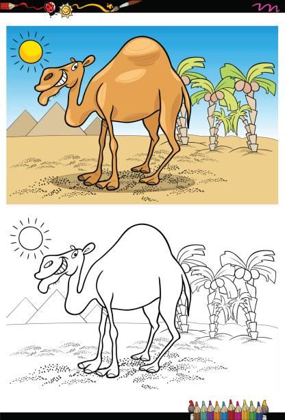 Vectores de Camello Dromedario y Illustraciones Libre de Derechos ...