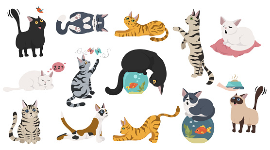 Cartoon cat characters collection. Different cat`s poses, yoga and emotions set. Flat color simple style design