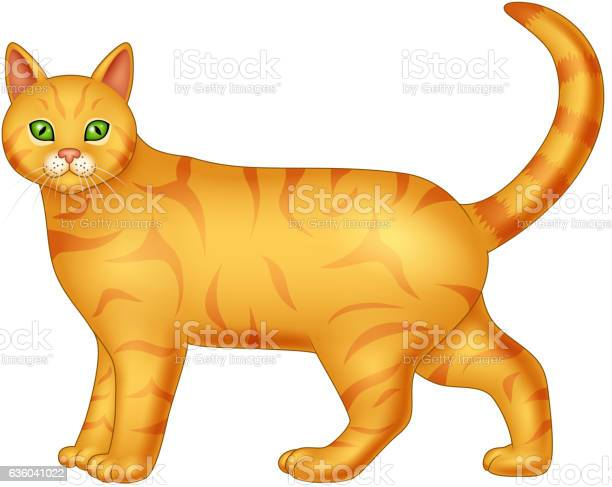 Cartoon cat isolated on white background vector id636041022?b=1&k=6&m=636041022&s=612x612&h=9gnmahwrdpne0jb2m7hounpwx5ubuupmynm7xtmmyli=