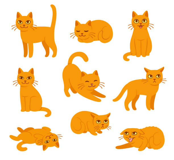 Cartoon cat poses set vector art illustration