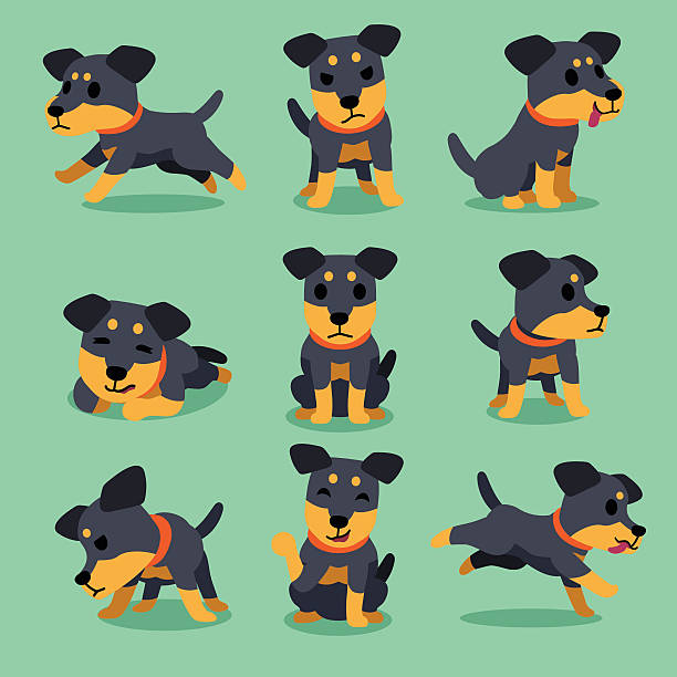 Cartoon character german hunting terrier dog poses – Vektorgrafik