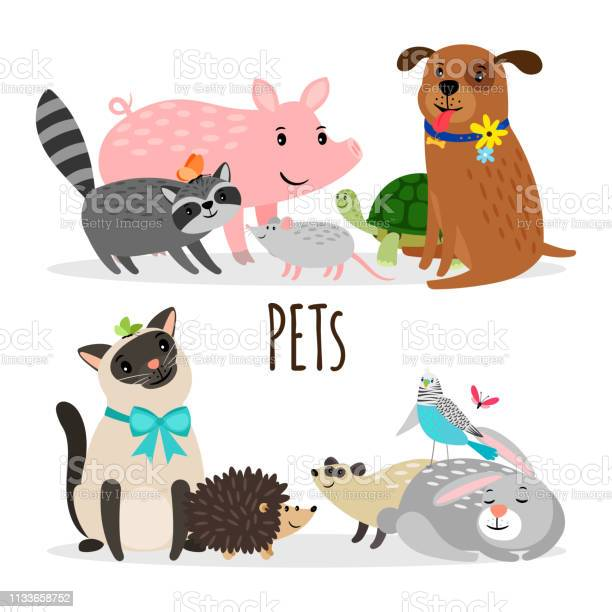 Cartoon character groups of vector pets isolated on white background vector id1133658752?b=1&k=6&m=1133658752&s=612x612&h=fdvawurfhwk3yyaoasgvkoijw5mc dd1  ua15ryv9y=