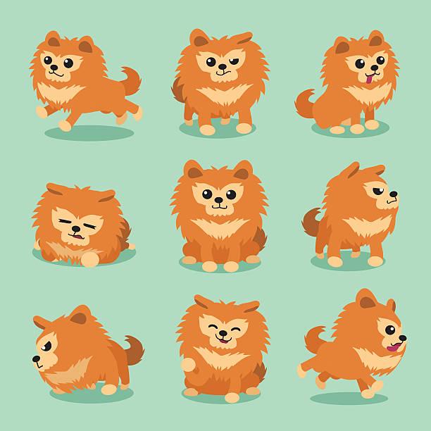 Best Pomeranian Illustrations Royalty Free Vector Graphics Clip