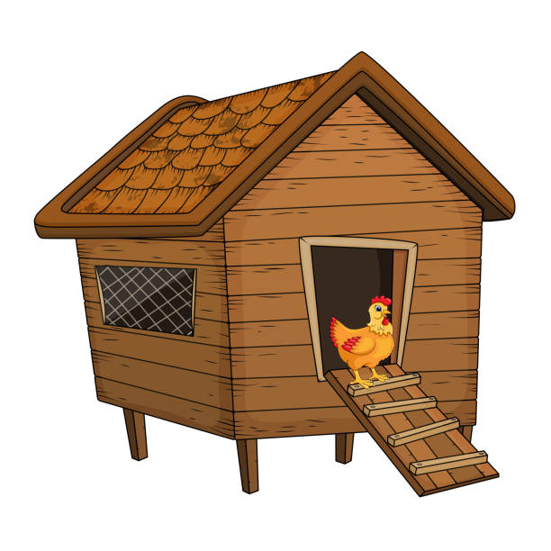 Cartoon Chicken Coop And Hen Isolated On White Background Vector Art Illustration