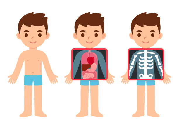 Cartoon child x-ray vector art illustration
