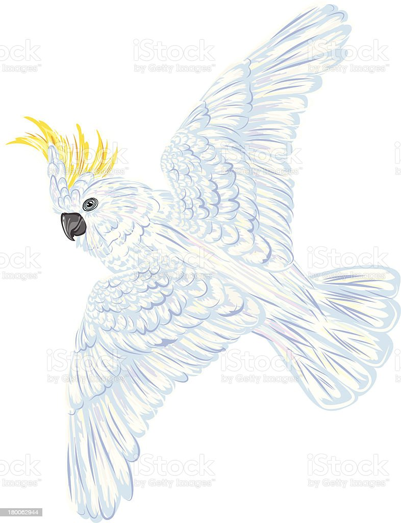Cartoon Cockatoo vector art illustration