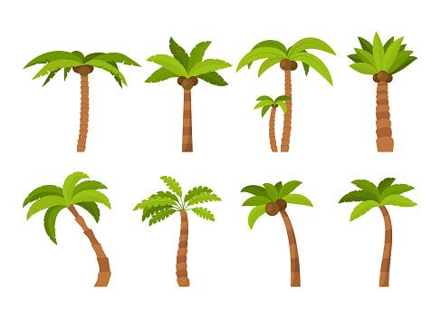 Cartoon Color Palma Tree Icon Set. Vector