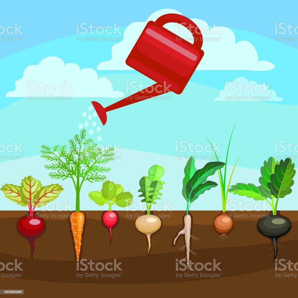 Ilustración de Dibujos Animados Coloridos Alimentos Orgánicos ...
