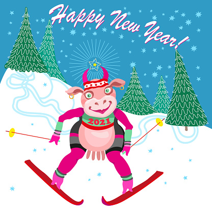 Cartoon cow goes skiing slalom between fir trees from the mountain. Humorous winter vacation tee shirt print with blue snowflakes and Chinese 2021 New Year holidays post card, party invitation