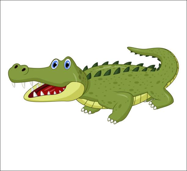 Cartoon crocodile isolated on white background Illustration of Cartoon crocodile isolated on white background crocodile stock illustrations