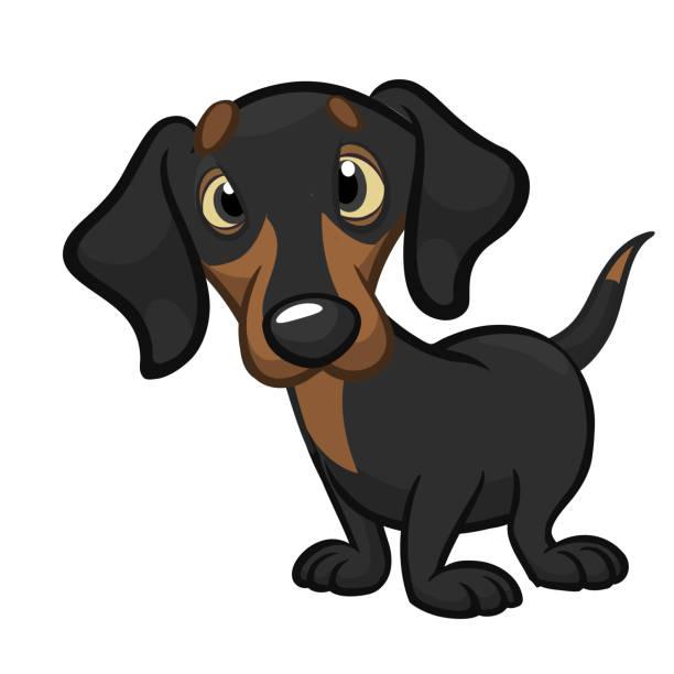 bildbanksillustrationer, clip art samt tecknat material och ikoner med tecknad söt dachshund hund. vektor illustration - tax