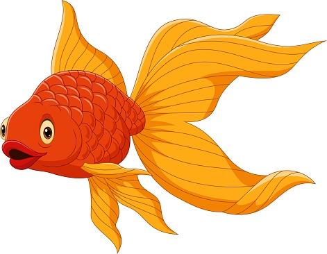 Cartoon cute goldfish on a white background