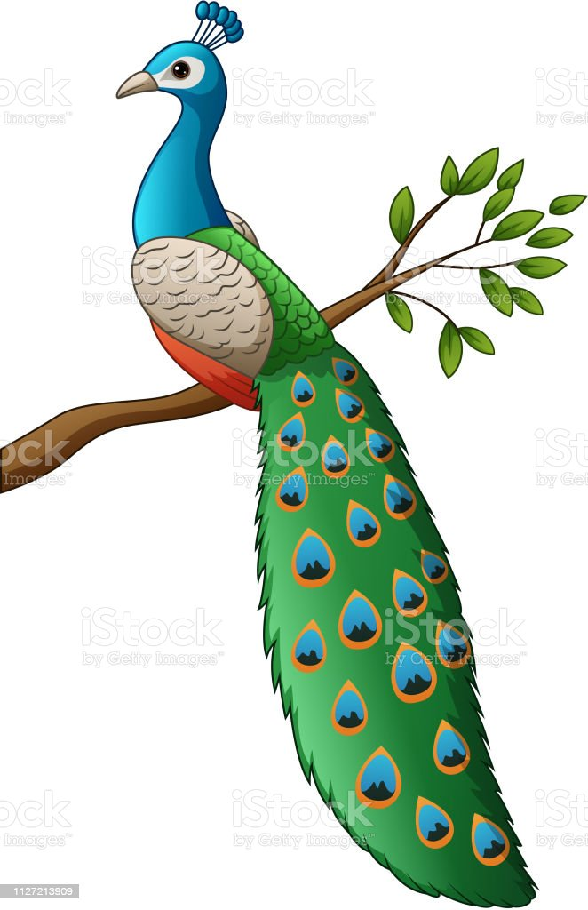 cartoon cute peacock on a branch stock illustration download image now istock cartoon cute peacock on a branch stock illustration download image now istock