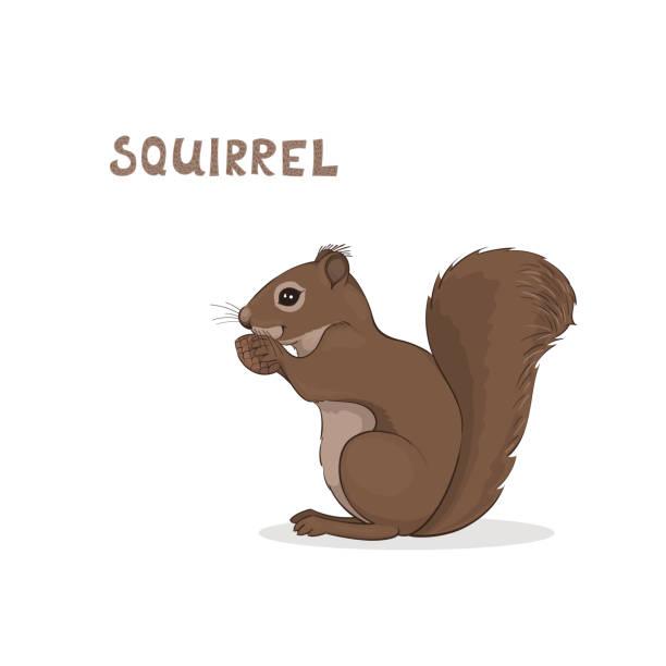 illustrations, cliparts, dessins animés et icônes de un écureuil mignon de dessin animé, isolé sur un fond blanc. alphabet animal. - écureui