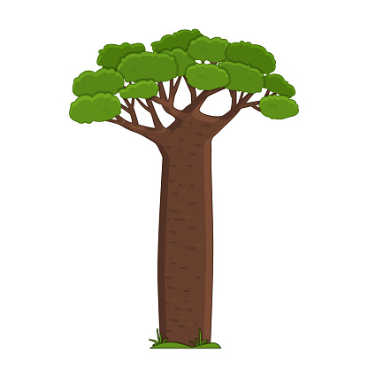 Cartoon cute vector outline Madagascar baobab green brown African tree. Doodle single isolated hand drawn illustration on white background