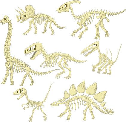 Dibujos animados dinosaurios colección esquelética conjunto